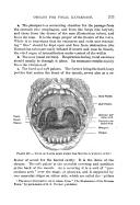 363 ページ